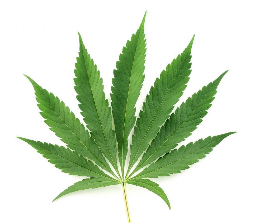 effetti-ganja-foglia-cannabis-indica-compressor