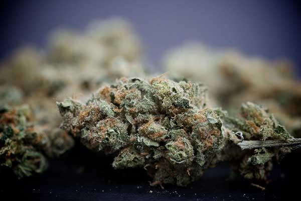 dosaggi-marijuana-cucina-compressor