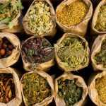 erba-medicinale