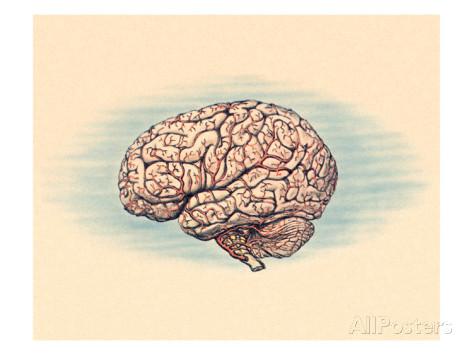 cervello-marijuana