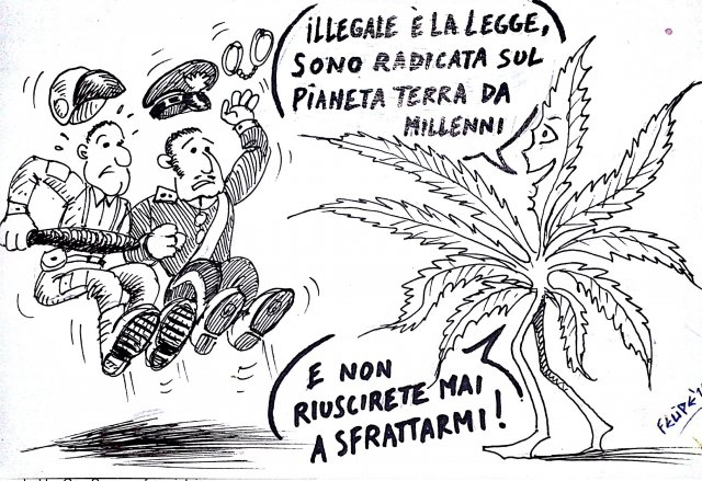 cannabis-marijuana-illegale-ganjanauta