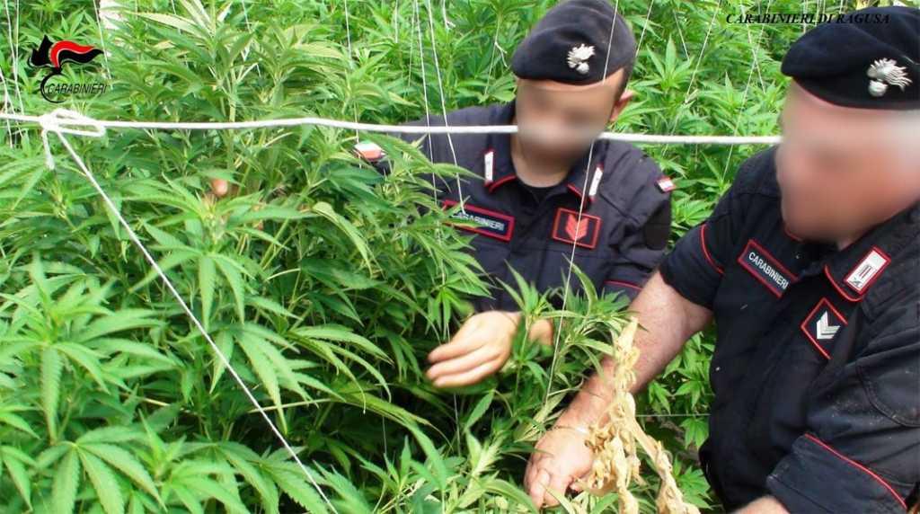 carabinieri-ragusa-cannabis-ganjanauta-compressor (1)
