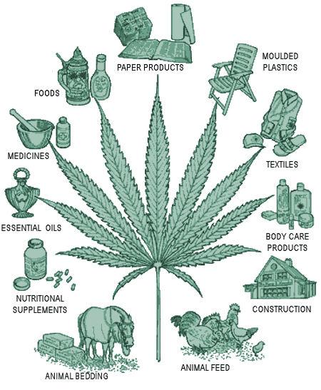 usi-cannabis-canapa-industriale-ganjanauta
