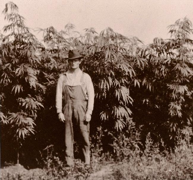 storia-cannabis