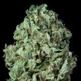 Sour Diesel Autofiorente (Dinafem Seeds)