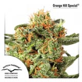 Orange Hill Special (Dutch Passion)