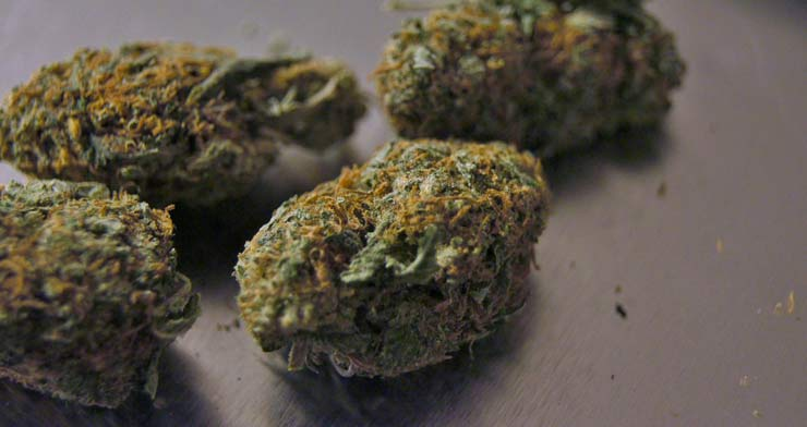 Cime di cannabis terapeutica