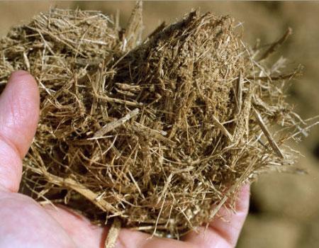 Biomassa - cellulosa di canapa