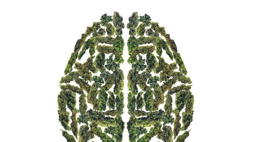 Cannabis terapeutica e cancro al cervello