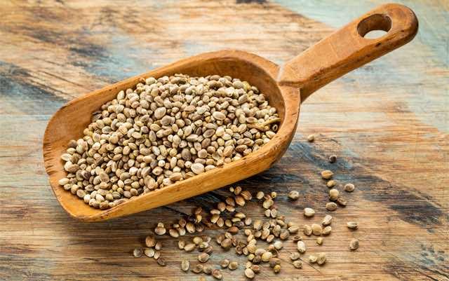 Proteine della canapa e semi di canapa