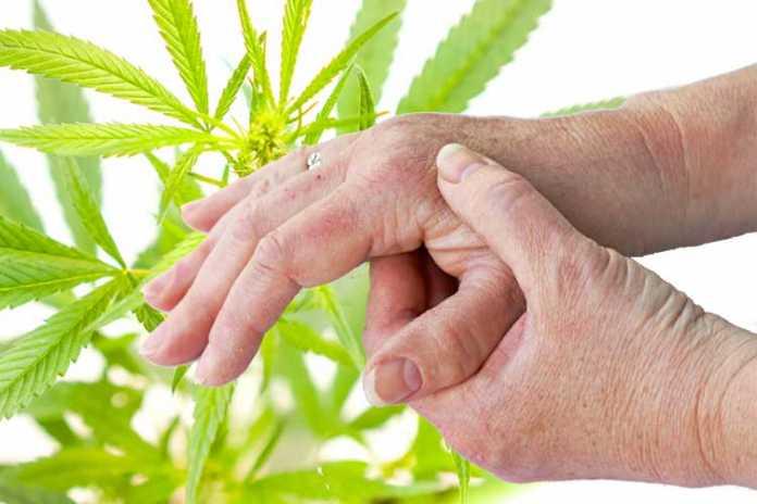 Cannabis e artrite