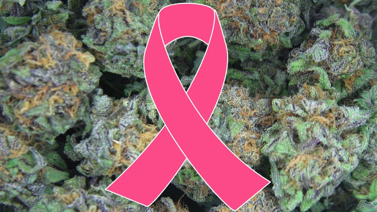 Nastro rosa per la lotta al cancro e cannabis