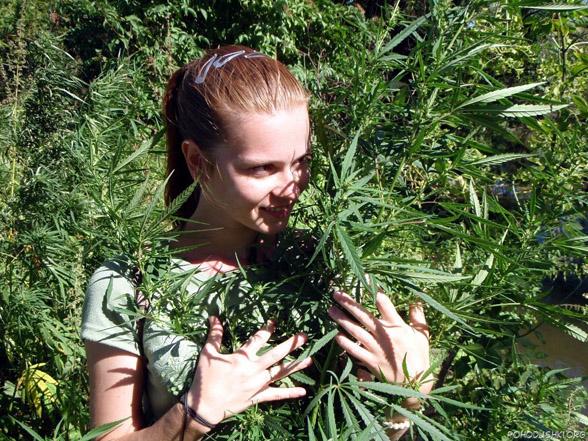 Cannabis e trattamento in chemioterapia