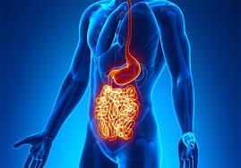 Illustrazione degli organi colpiti dal morbo di chron