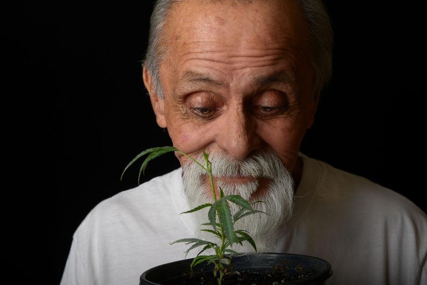 Anziano ed una pianta di cannabis