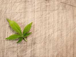 cosa fare delle foglie canapa?